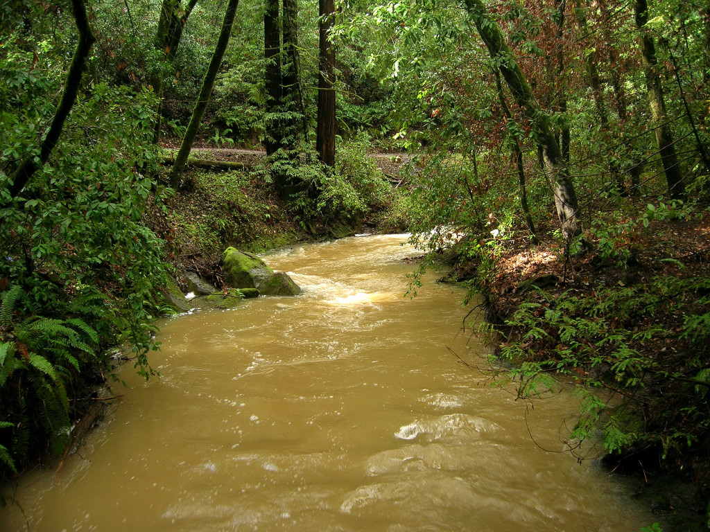 McGarvey Gulch Creek in Huddart Park