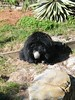 dhh ag (dmathew1) Tags: tampa florida lowryparkzoo babywhitetiger babymandrill babyorangatun babycolobusmonkey babyguenon