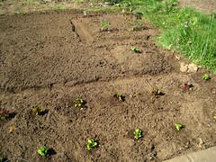 Garden_Starts
