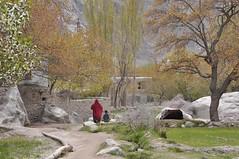 Dum Sum or Dan Sam Valley Baltistan (Karrar Haidri) Tags: concordia k2 karakoram hunza gilgit broadpeak skardu baltoro khaplu concordians k2gondogorolatrek gilgitbaltistan saltorosummits