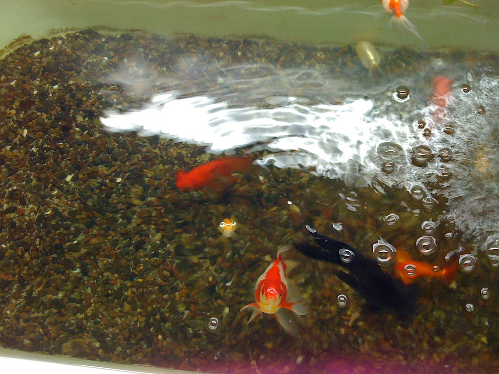The world 39 s best photos of bathtub and goldfish flickr for A fish in the bathtub
