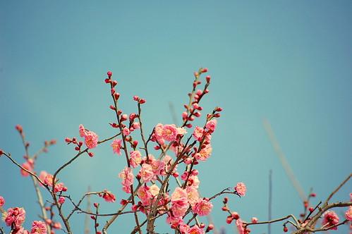 Spring ?