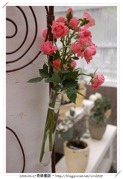 DSC_2442試管玫瑰