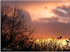 Beauty in the sky ( Katie ann. Off more than on.) Tags: trees light sunset sky clouds dark coloured phoddastica
