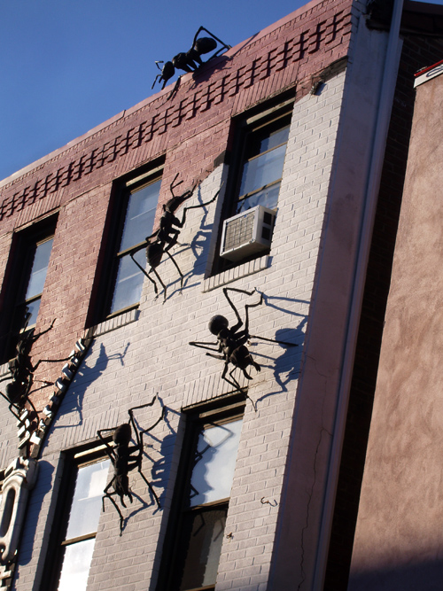 big ants on a wall