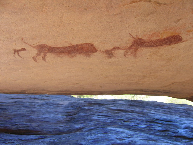 baboon family painting underside of rock   flickr   photo sharing
