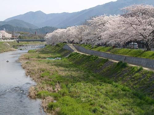 20080405 哲学の道・鴨川の桜 169