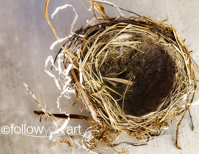 nestweb2