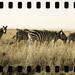 National Parks Kenya_6