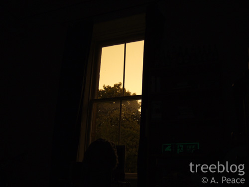 tree through a window at night