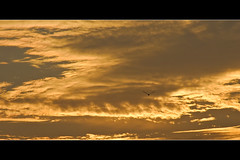 Horizontals: Fly little bird... (manganite) Tags: sunset sea summer orange sun hot beach nature colors beautiful beauty birds animals japan strand digital geotagged nikon colorful asia pretty afternoon seasons tl dusk framed kamakura playa  onecolor nippon d200 nikkor dslr kanagawa nihon kanto yuigahama 18200mmf3556 utatafeature manganite nikonstunninggallery thecolororange geo:lat=35308603 geo:lon=139544601 date:year=2006 date:month=september date:day=2 thetowerofpriapus format:orientation=landscape format:ratio=21