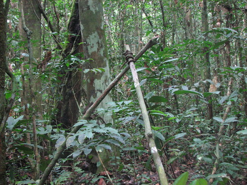 a small mammal trap in the D12 forest