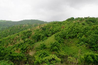 Green Jamaica