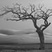cây cô đơn