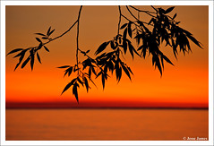 Silhouetted Leaves (Jesse James Photography) Tags: sunset sky lake ontario canada beach water leaves silhouette sand nikon rocks lakeontario portdalhousie d300 nikon80200 nikond300