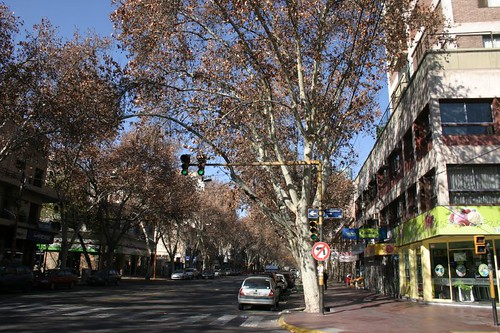 Tree-lined avenues in Mendoza, Argentina.
