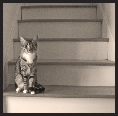 stairs, with Moxy