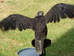 Birds of Prey (Tjflex2) Tags: trip travel vacation holiday history beautiful birds architecture arthur nice europe cityscape tour prague walk scenic praha praskhrad exhibition czechrepublic historical birdsofprey falconry hradany praguecastle castledistrict worthwhile greatcity