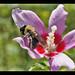 pollen  heaven :)