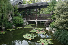 Classical Chinese Garden (Maira Wenzel) Tags: usa water oregon garden portland pond chinesegarden lpfloating