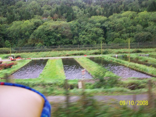Ireland - Killkenny to Wicklow - fish farm??