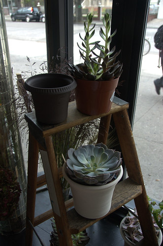 Succulents, Sycamore, 1118 Cortelyou Road