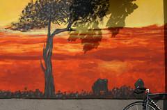 Urban Safari (sonofsteppe) Tags: africa street sunset shadow red urban orange black detail tree art bicycle yellow horizontal wall zoo graffiti design daylight mural hungary sundown outdoor background painted budapest gray vivid safari explore backdrop visual exploration thewall frontview fragment ilmuro 30mm wallscape állatkert sonofsteppe pusztafia dózsagyörgyút urbanlifeoftrees