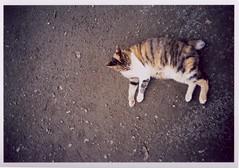 猫の庭05