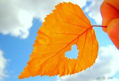 Ekim sonbaharn kalbidir...Exp Oct 10, 2008 #169 (*lkbahar arks*) Tags: turkey trkiye hazan gkyz ak kalp sivas ekim hzn sonbahar yaprak abigfave mavigkyz goldstaraward grouptripod