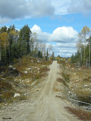 Narrowest part of the logging road