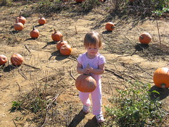 Little pumpkin picker