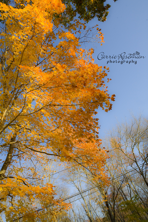 yellowTree2