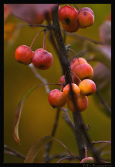 Herbst Impressionen - Autumn Impressions
