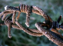 Twice - connected or entangled (:Linda:) Tags: autumn metal fence germany village hoarfrost metallic herbst spiderweb thuringia cobweb barbedwire spinne connected autumnal spinnwebe entangled hildburghausen herbstlich brden picturewithmusic