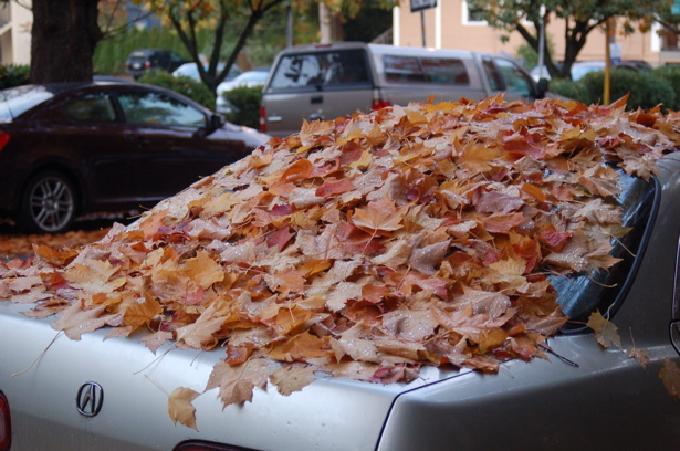 autumn_leaves_silvercar_back