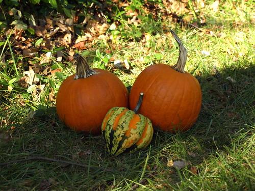 pumpkin still life 2