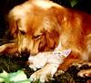 Tiger genießt es  ,  93a (roba66) Tags: dog cute animal animals cat tiere tiger hund katze liebe tier deutschetelekom naturescreation invitedby vanagram saariysqualitypictures atomicaward mbpictures