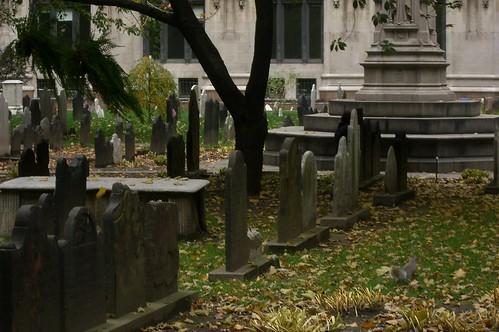 NYC squirrel on graveyard