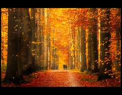 Les couleurs de la vie (♥ Damona-Art •.¸¸.•´¯`•.♥.•´¯`) Tags: autumn trees people fall nature colors forest walking photography gold frames woods raw photographer belgium couleurs herbst paths forests goldenlight lavie d300 zoniënwoud overijse theworldthroughmyeyes infinestyle thesecretlifeoftrees