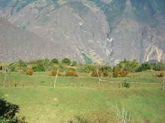 CIMG2161 (zoomcharlieb) Tags: peruvianimages