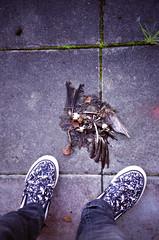 (dd) Fgel #2 (jear) Tags: above bird film analog 35mm dead death shoes fuji sweden skor