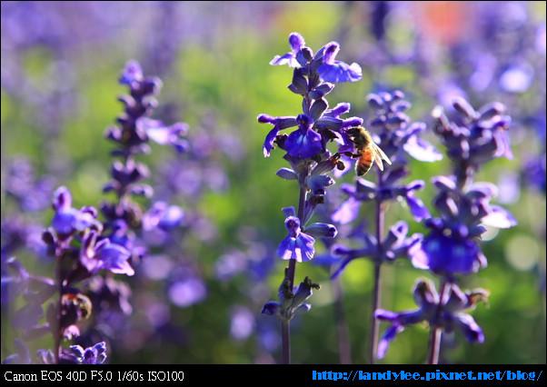 9711-新社花海:Date with Bee_023.jpg