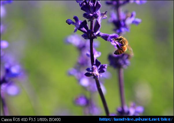 9711-新社花海:Date with Bee_041.jpg