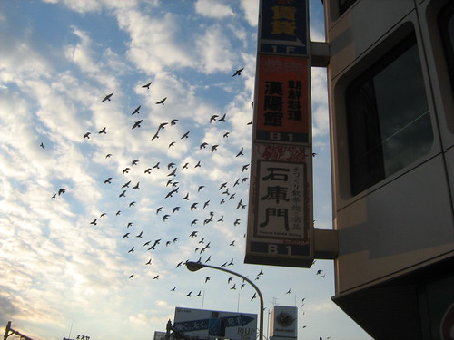 Birds flying over Takadanobaba 2