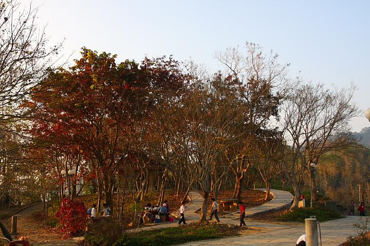 關仔嶺紅葉公園10