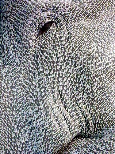 sperm-elephant
