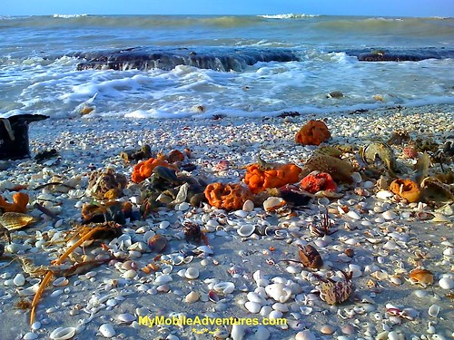 01-21-08_0821-Sanibel-Island-The-Rocks