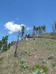 Coming off the ridge