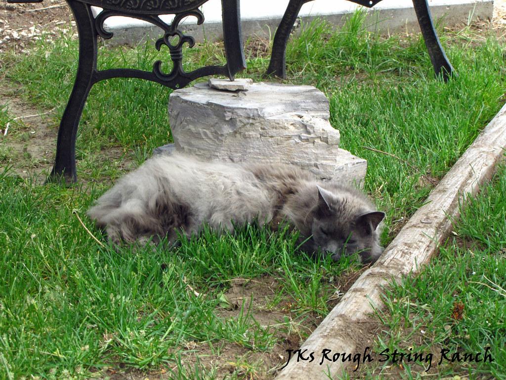 Rock Solid Cat