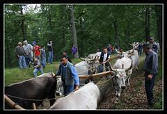 sgm11-(34) (biagiolabbate) Tags: canon nikon san di matera albero maggio cima giuliano feste 2011 accettura